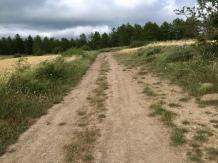 Llegada del camino a la zona de la Cañada