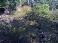 Corral de León