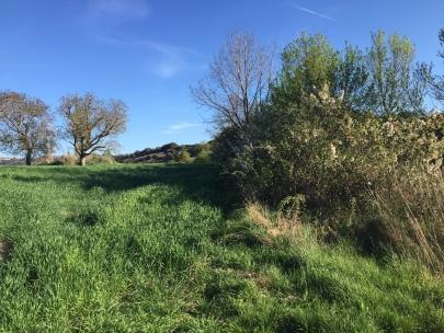 Imágen de campos de cereal junto al Colaso