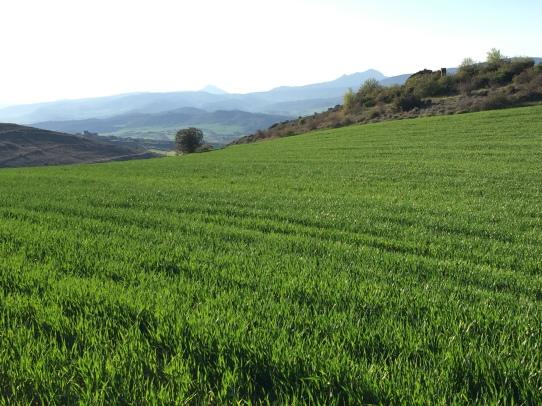Campos de cultivo junto al corral