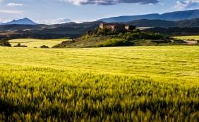 Campos de cereal y caseró de Buzcalapoyo