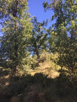 Vegetación de la zona de Lerda