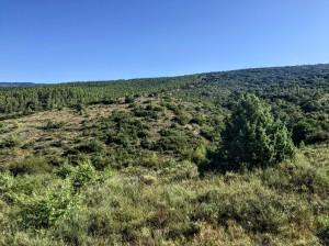 Vista del Monte de Santa Cruz