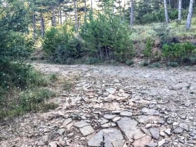 Cruce de caminos en la zona alta del Monte de Santa Cruz
