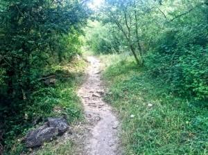 Detalle de la senda cerca del pueblo de Ruesta