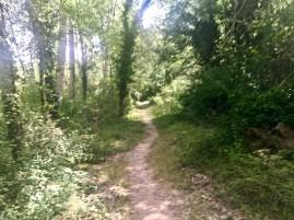 Detalle de la senda cerca del camping de Ruesta