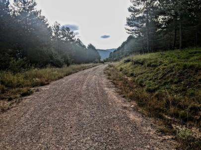 Camino hacia Ruesta entre pinos